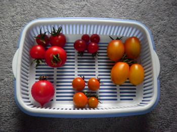 5種類収穫.JPG