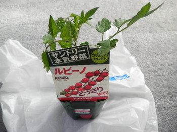 SANY0032.JPG
