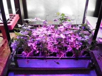 植物育成LED.JPG
